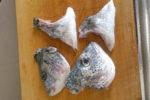 チヌ (黒鯛)の頭の割り方・さばき方