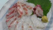 チヌ (黒鯛)の刺身