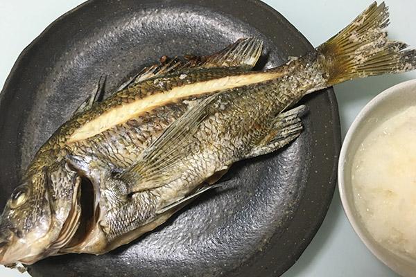 チヌ(クロダイ)料理塩焼き