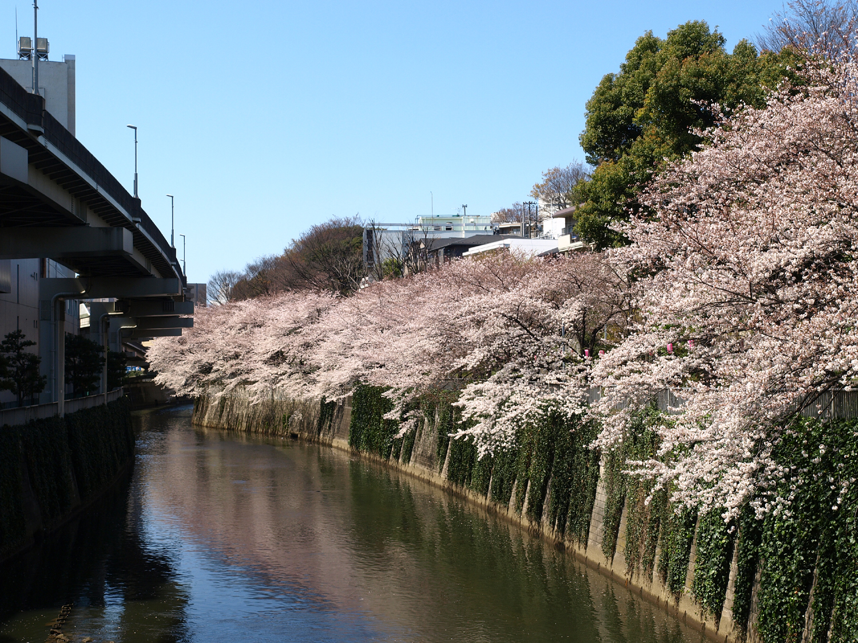 春シーバスイメージ画像