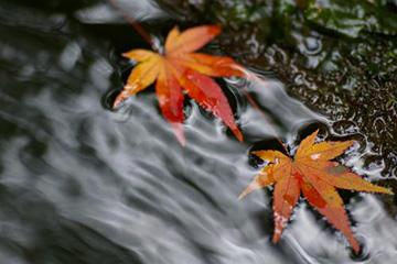 タイラバ時期秋イメージ