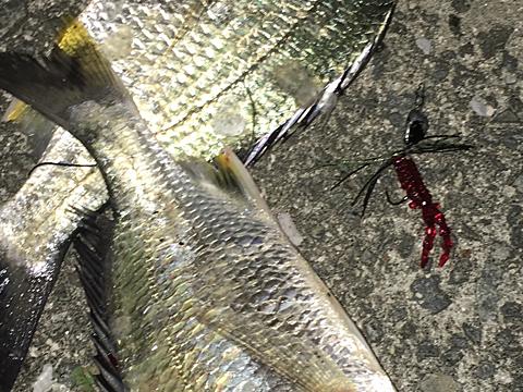 チニングワームレッドカラーで釣った釣果