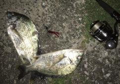 チニングの釣り方