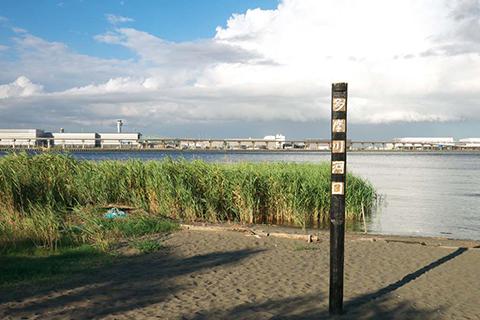 イワシパターンポイント河口