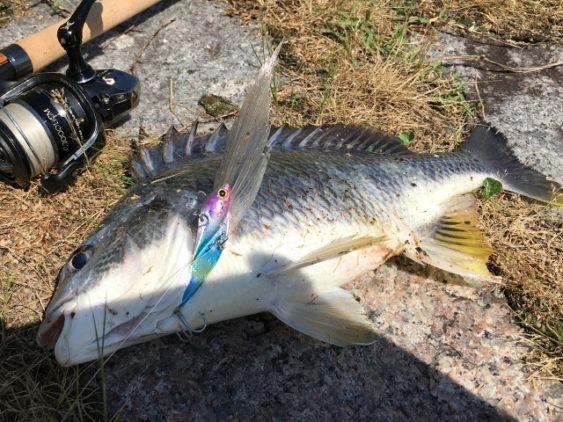 チニング釣り方バイブレーション