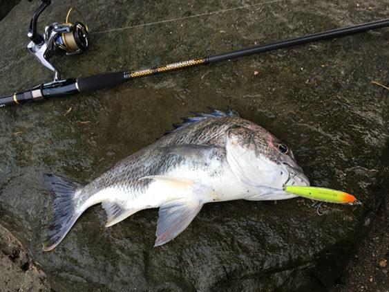 チニング早春釣果