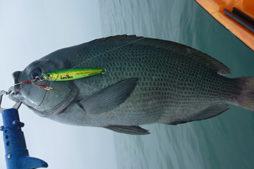 冬に釣れる魚・ルアーで釣りやすい魚
