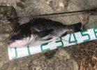 チニングが釣れない!ときのルアーローテーションと釣り方