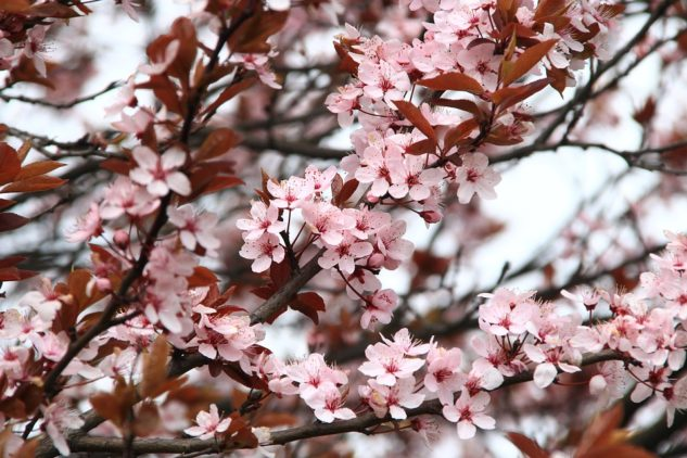春アジング