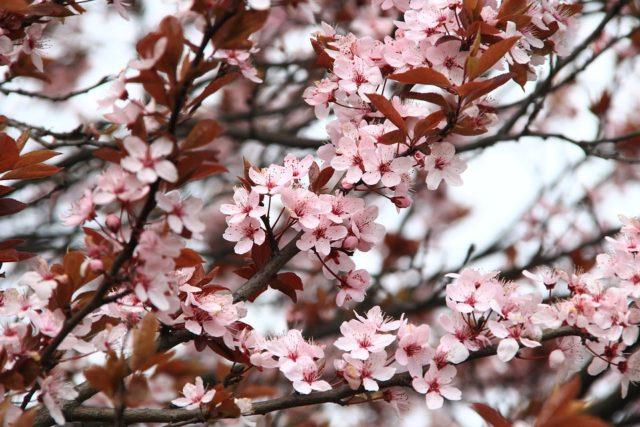 春季を表す画像