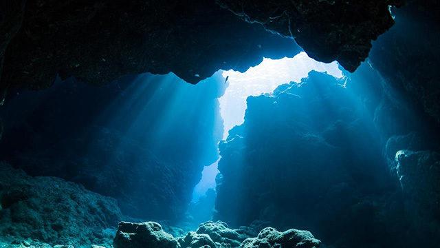 ケイムラが目立つ水中の画像