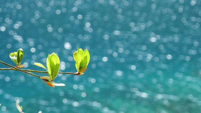 春の雨後の海画像