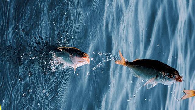 活性が高い夏の釣り画像