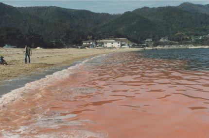 夏のアジングの大敵赤潮画像