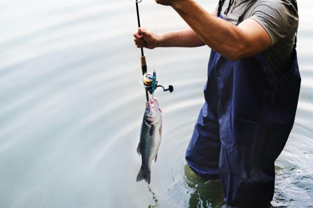 シンキングペンシル以外のルアーでシーバス釣った画像