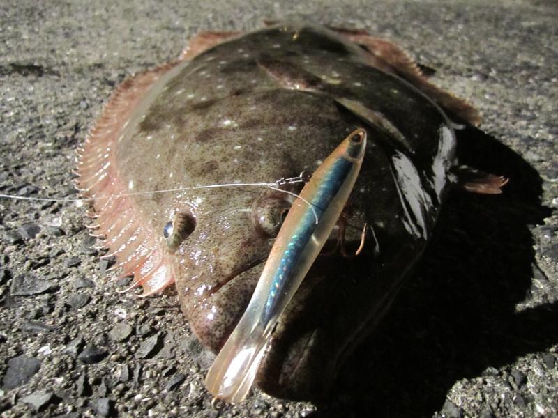 ライトジギングで釣れるヒラメ画像