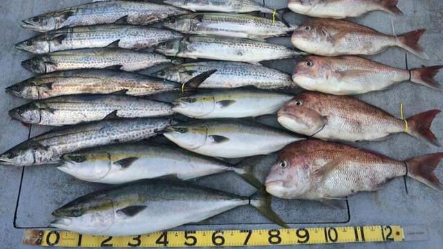 ライトジギングで釣れる魚画像