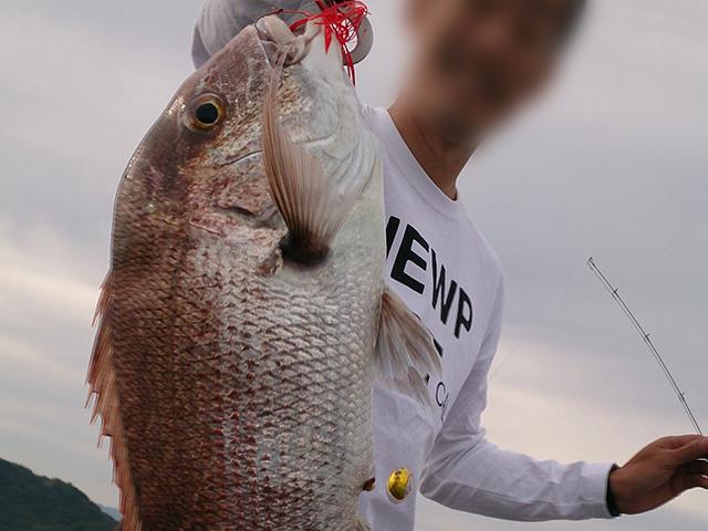 タイラバ真鯛画像