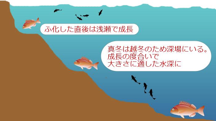 真鯛生態生息域画像