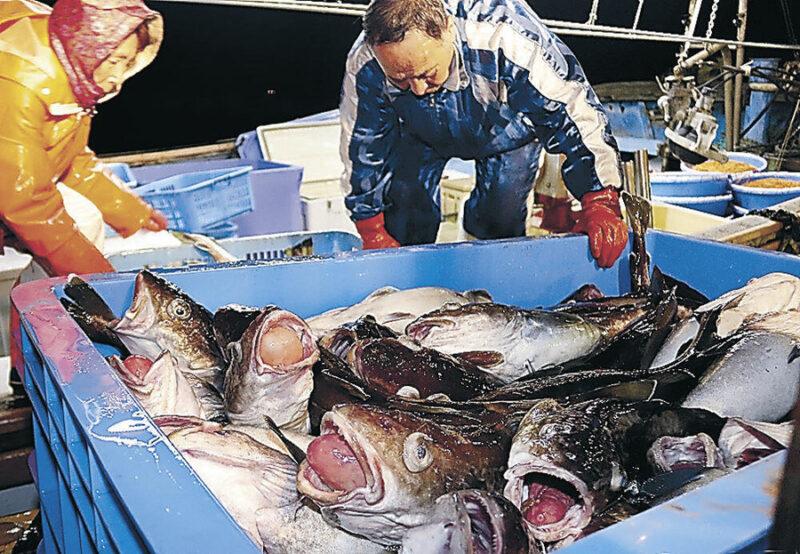 タラ漁画像