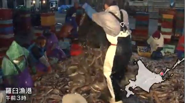 スルメイカ漁画像