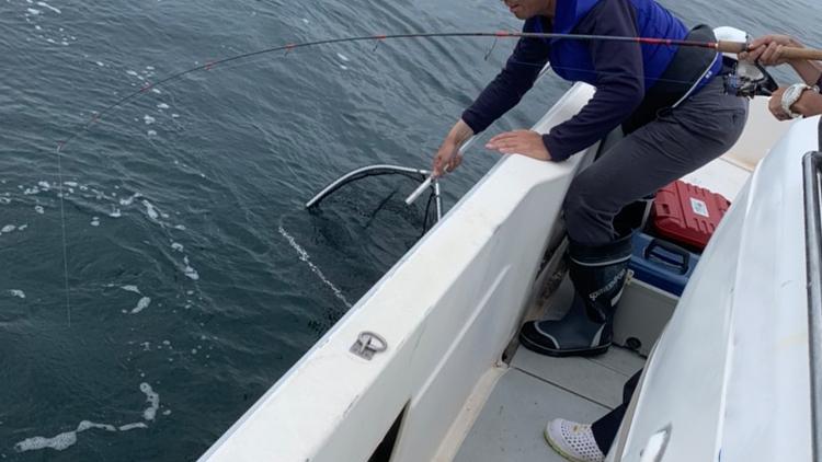 岩国沖釣れたサワラのランディング中
