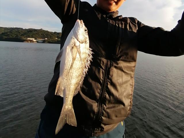 チニングで釣れる魚