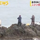 春を告げる産卵期のニシンの大群「群来」を確認釣り人も押し寄せ北海道