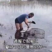 フィンランドの湖で釣り糸に絡まった白鳥を助ける警官に賞賛続出