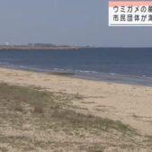 日本有数のウミガメの産卵地で市民らが清掃作業