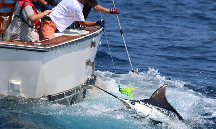 カジキ釣りランディング